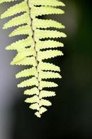 foto de la naturaleza