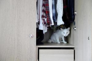 Cat and Wardrobe photo