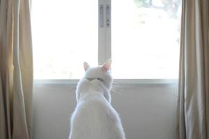 White Cat Relaxed photo