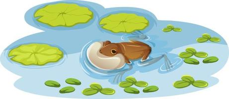 A frog on lotus leaf in the water vector