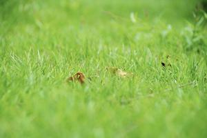 Background green grass meadow spring summer soft blurred background non-selective focus photo