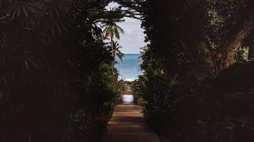 el camino de grava que atraviesa el bosque conduce al mar. foto