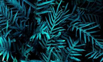 tropical leaf forest glow in the dark background. photo