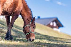 A horse eats in the meadow near the farm photo