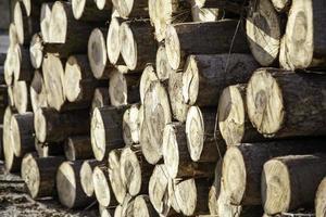 troncos de madera leña foto