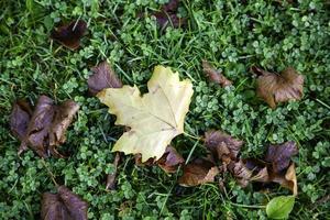 Autumn leaves ground photo