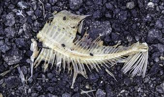 Scrape of fish photo