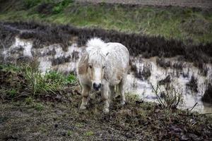 campo de pony salvaje foto
