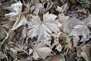 hojas de otoño congeladas foto