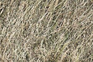 Hay bale texture background photo