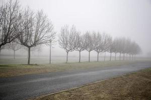 bosque con niebla foto