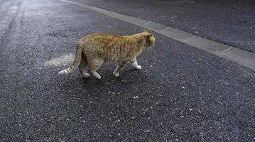 gatos callejeros en la ciudad foto