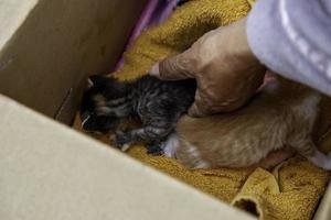 gatos cachorros abandonados en caja foto