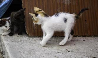 gatitos abandonados naturaleza foto