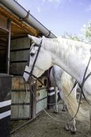 Horse in stable photo