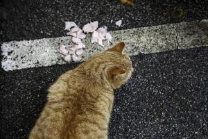 gatos callejeros comiendo en la calle foto