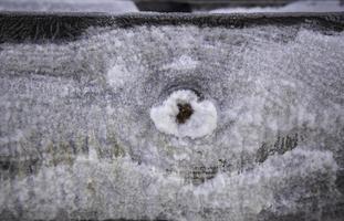 sal seca sobre madera foto