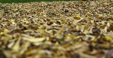 hojas de otoño mojadas foto