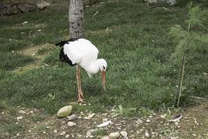 Big bird zoo photo