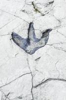 huella de dinosaurio antiguo foto