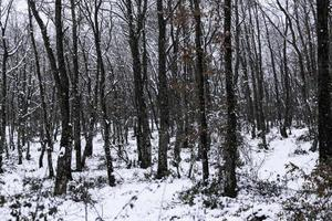 Natural snowy forest photo