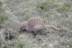 Rodent wild park photo