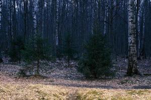 misterio bosque otoñal panorama en la niebla de la mañana foto