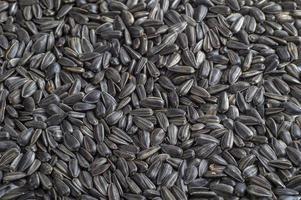 semillas de girasol negras. para textura o fondo foto
