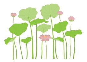 Big lotus petals and lotus . vector