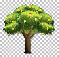 Mango tree isolated vector