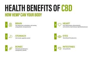 Benefits of CBD for your body, white poster with infographic. Health benefits of Cannabidiol CBD from cannabis, hemp, marijuana, effect on body vector