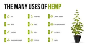 The many uses of hemp, white poster with infographic of uses of cannabis and greenbush of cannabis plant vector