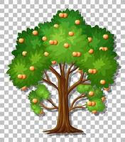 Orange tree isolated vector