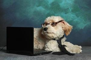 The Computer Wiz photo