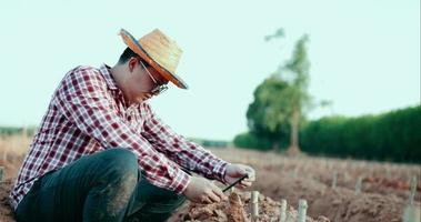 jovens agricultores usam telefones celulares coletam dados de cultivo de mandioca video