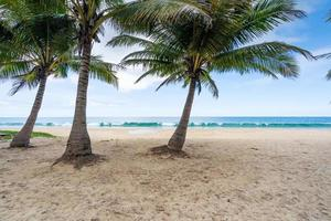 Summer background of coconut palm trees on white sandy beach photo