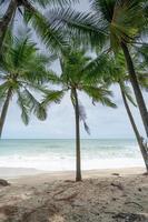 fondo de temporada de verano de increíbles palmeras de coco foto