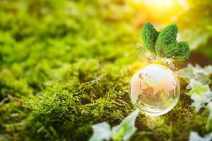 Glass globe nature concept photo