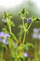 Flores violetas violetas con hierba sobre fondo verde borroso foto