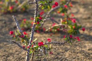 Red cactus flower photo