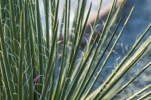 Cactus plant in park photo