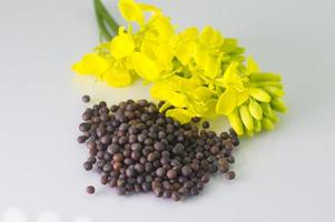 Brown Mustard flower and seeds on white background photo