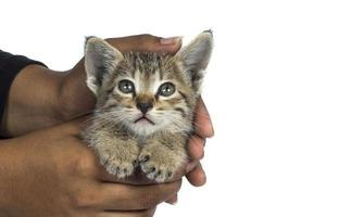Small kitten in human hands photo