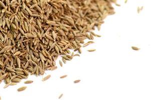 cumin seeds isolated on white background photo