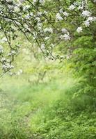 camino en el jardín entre árboles en flor foto