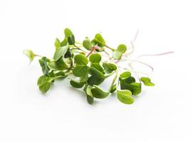 micro verduras de rábano foto
