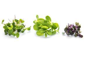 conjunto de microgreens frescos foto