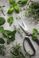 hierbas de cocina y tijeras foto
