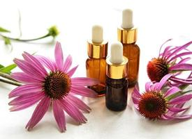 Bottles with essence oil and echinacea flowers photo