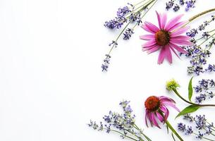 Echinacea and lavender flowers flat lay. White background. photo